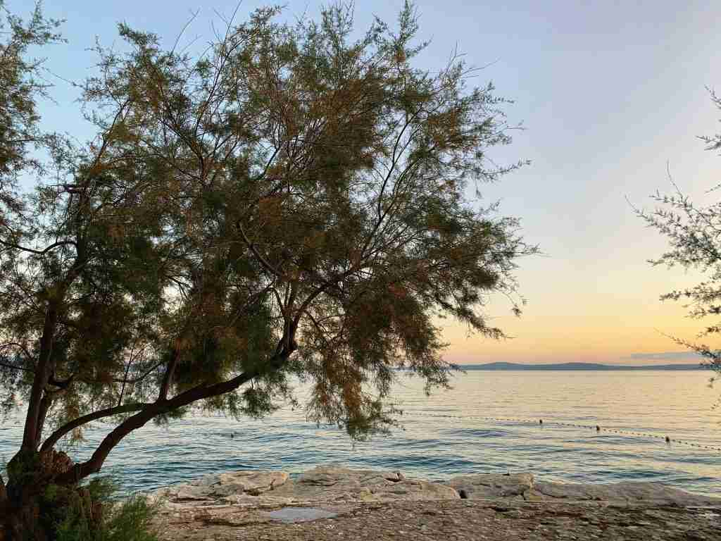 sunset over the Adriatic Sea with an olive tree in Split, Croatia